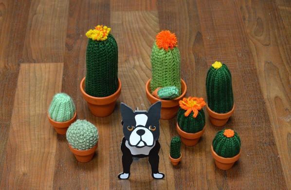 cactusfam